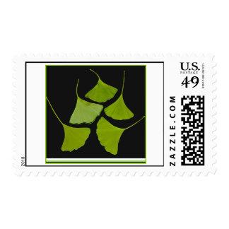 Sello de las hojas del Gingko