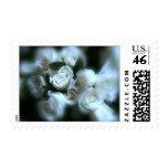 Sello de lino de los rosas blancos