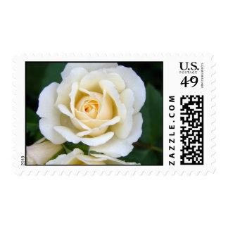 Sello de los E.E.U.U. del rosa blanco