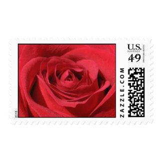 Sello de los E.E.U.U. del rosa rojo