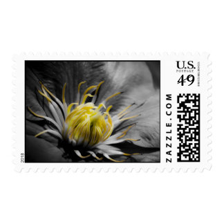 Sello de los E.E.U.U. - flor del Clematis