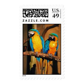 Sello de los loros del macaw del azul y del oro