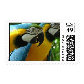 Sello de los Macaws del azul y del oro