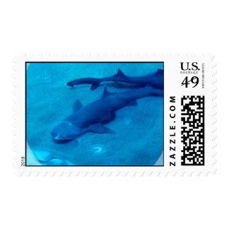 Sello de los pares del tiburón