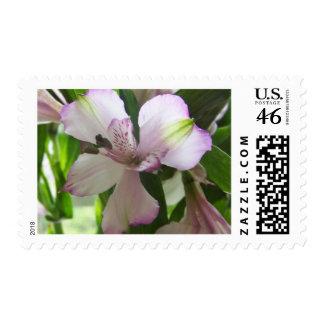 Sello de lujo de la flor 64