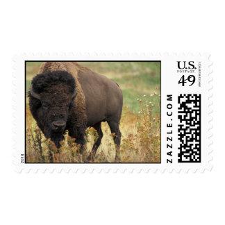 Sello de madera del bisonte