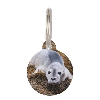 Sello de puerto lindo del bebé placa para mascotas