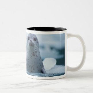 sello de puerto pacífico, richardsi del vitulina taza de café de dos colores