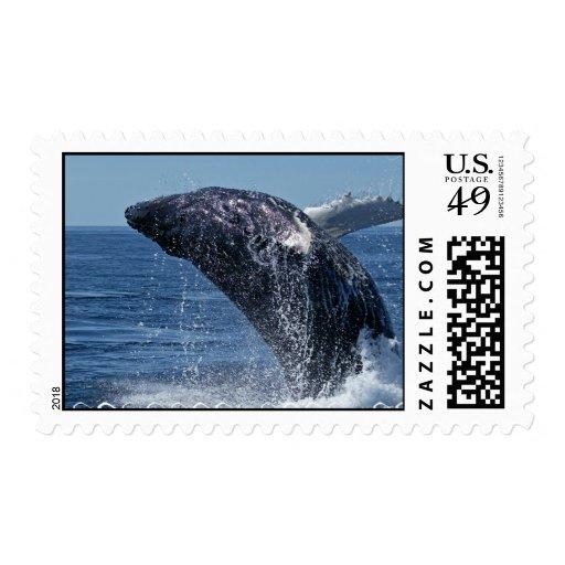 Sello de salto de la ballena jorobada