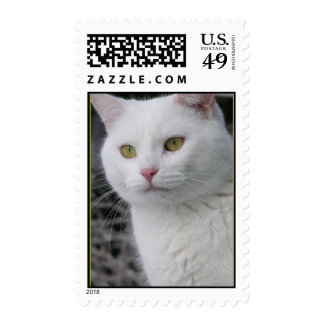 Sello de Sr. Cat Portrait