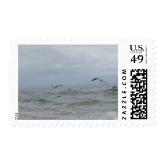 Sello de USPS del océano y de los pájaros