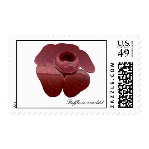 Sello del arnoldii de Rafflesia
