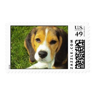 Sello del beagle