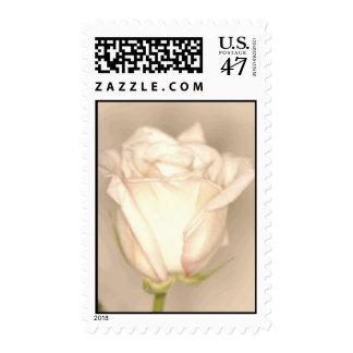 Sello del boda del rosa blanco