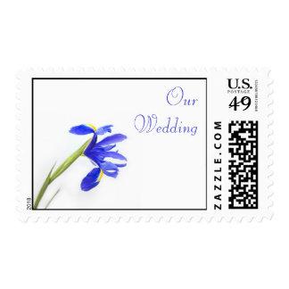 Sello del boda - flor púrpura del iris