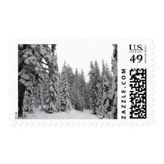 Sello del bosque de Oregon del invierno