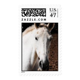 Sello del caballo de Lipizzaner