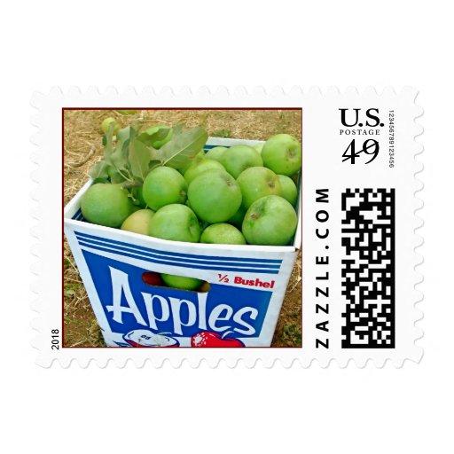 Sello del cajón de Apple