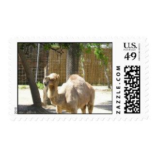sello del camello