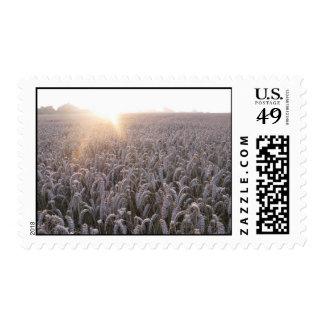 Sello del campo de trigo