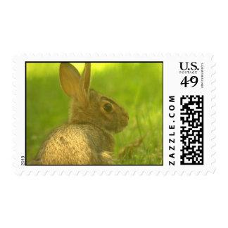 Sello del conejo de conejito