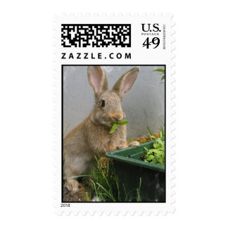 Sello del conejo de conejo de rabo blanco
