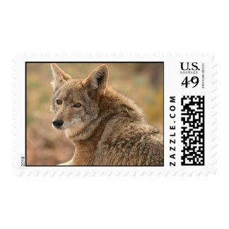 Sello del coyote