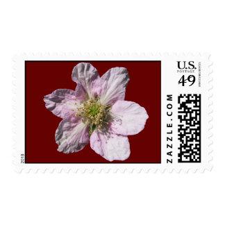 Sello del ~ de la flor de Blackberry