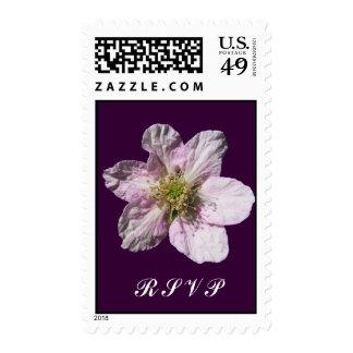 Sello del ~ de RSVP de la flor de Blackberry