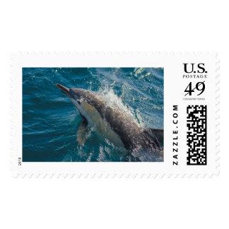 Sello del delfín común -- diversos tamaños