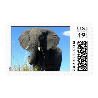 Sello del elefante africano