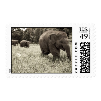 Sello del elefante del bebé