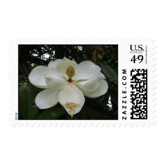 Sello del flor de la magnolia