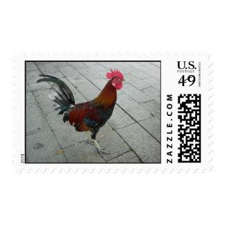Sello del gallo de Keywest