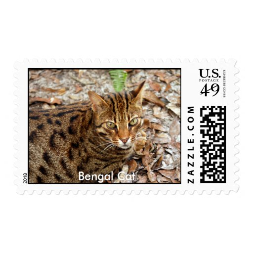 Sello del gato de Bengala, gato de Bengala