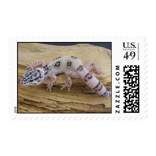Sello del Gecko del leopardo