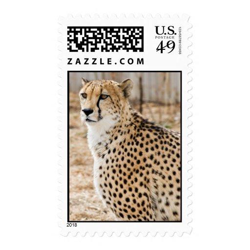 Sello del guepardo