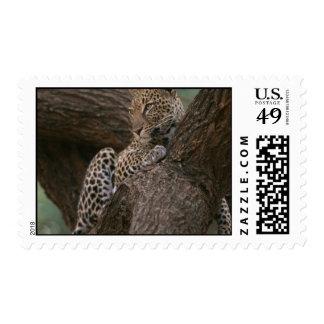 Sello del hábitat del leopardo