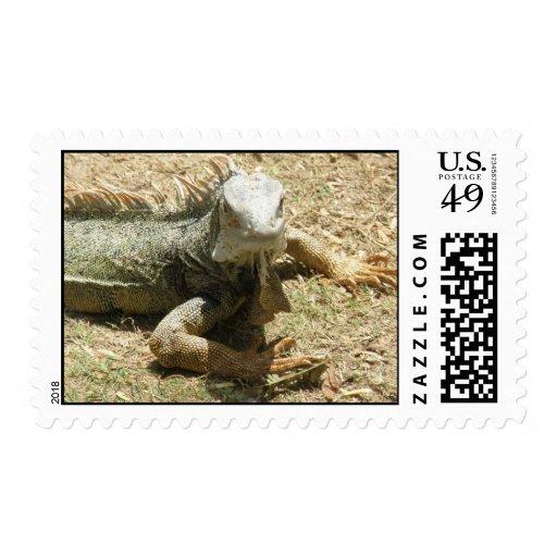 Sello del lagarto de la iguana
