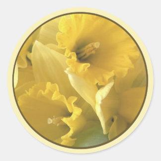 sello del narciso pegatina redonda
