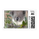 Sello del oso de koala