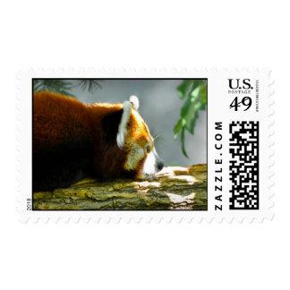 Sello del oso de panda roja