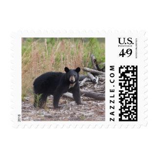 Sello del oso negro de la Florida