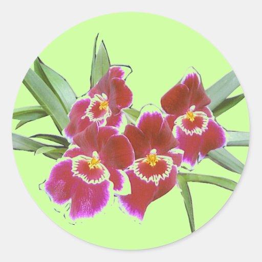 Sello del pegatina del aerosol de la orquídea