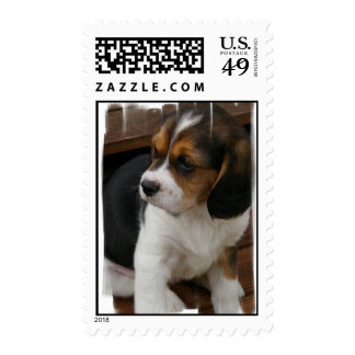 Sello del perrito del beagle