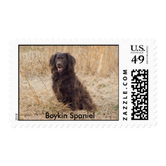 Sello del perro de aguas de Boykin