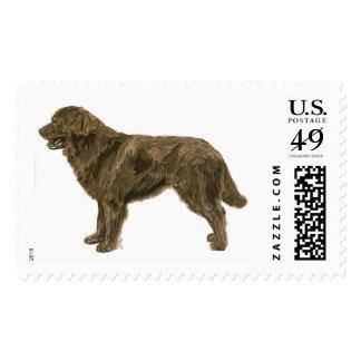 Sello del perro de Brown Terranova