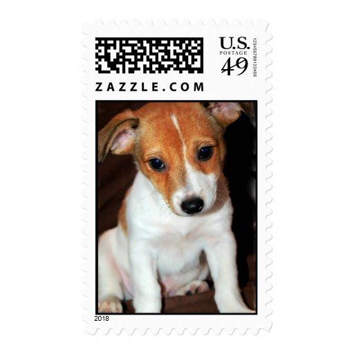 Sello del perro de perrito de Jack Russell Terrier