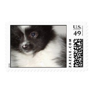Sello del perro de Pomeranian del juguete
