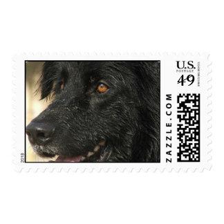 Sello del perro de Terranova